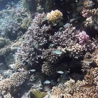 11 Minuten ungeschnittener Flug über's Riff im Flachwasserbereich beim Austauchen, September 2009