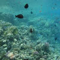 Blick ins Riff, September 2009