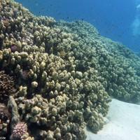 Blick am Riff entlang, September 2009
