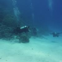 Das Riff zwischen 20 und 30 Metern Tiefe, September 2009