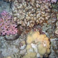 Korallengarten, März 2005
