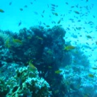 buntes Treiben am Riff, September 2002