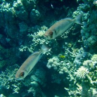 Wächterfische, September 2002