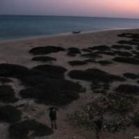 Zabargad Island, März 2005