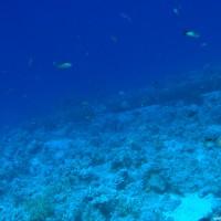Wohl der Mast der Yolanda, der als erstes auftaucht wenn man aus östlicher Richtung vom Shark Reef kommt, Mai 2007