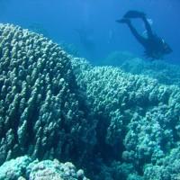 interessante Korallenformationen im Flachwasserbereich, Mai 2007