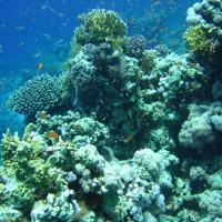 buntes Treiben am Riff im Flachwasserbereich, Mai 2007