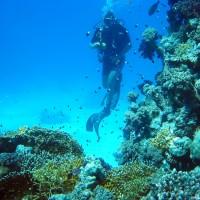 Taucher vor Riff, Mai 2004