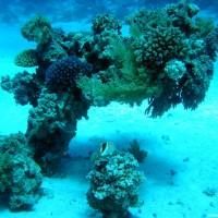 Korallenblock, Mai 2004