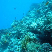 vielfältiges Unterwasserleben, Mai 2004