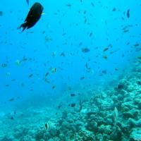 Fischvielfalt am Riff, Mai 2004