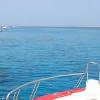 Schön zu sehen der große Korallengarten von Sha'ab Quais, Mai 2004