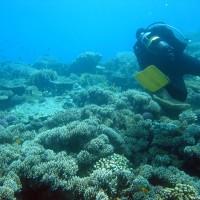 Unser Guide schwebt voraus über den Korallengarten, Mai 2004