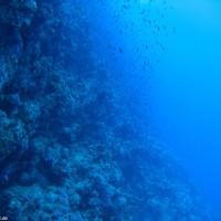 Der Drop-Off auf der westlichen Seite des Gordon Reefs, Mai 2007