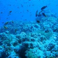 Am Riff hinunter, Mai 2007