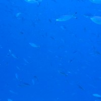 Blick ins Blauwasser, Mai 2007