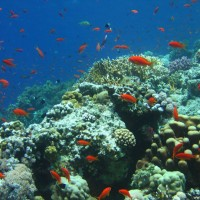 Das Riff im Flachwasserbereich, Mai 2007