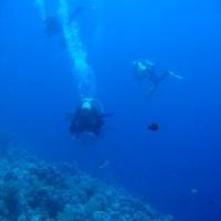 Taucher im tieferen Bereich des Riffs, Mai 2007