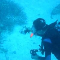 Martin und der Weißspitzenriffhai, Oktober 2006