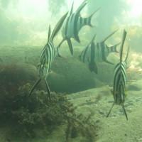 Fischsuppe beim Austauchen, November 2014