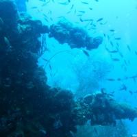 Was war das einmal gewesen sein bevor hier die Korallen eingezogen sind?, September 2006