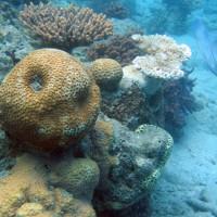 diverse Korallen, September 2006