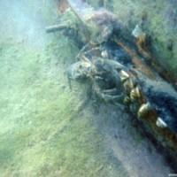 Süßwasserkrebs am Ruderbootwrack, Juli 2002