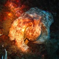 Oktopus, August 2005