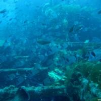 Fischreichtum über den Ladeschächten, August 2006