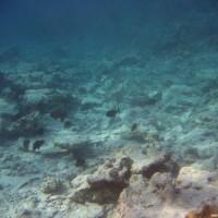 von Korallenbleiche zerstörtes Riff, September 2005