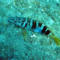 Einer der wenigen Fische auf dem Tauchgang, April 2003