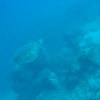 Schildkröte, September 2007