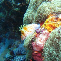 Korallenwächter, September 2007