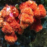 bunte Korallen, September 2007
