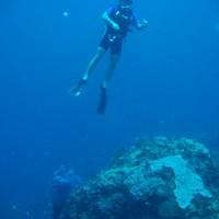 Shortie-Taucher in 30 Metern Tiefe bei 17 Grad..., Oktober 2007