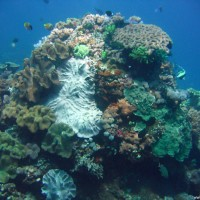 Großer bunter Korallenblock, Oktober 2007