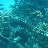 Die aufgebauten Metallkäfige sind ein Refugium für alle möglichen Tiere, September 2007