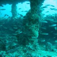 Jede Menge Fisch im Wrack, September 2005