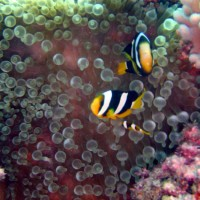 malediven2002_005
