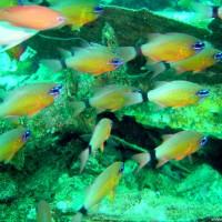 Husarenfische, Oktober 2003