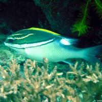 Fisch unbekannt - für Hilfe dankbar, Oktober 2003