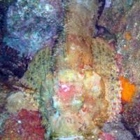 Fetzen-Drachenkopf, Oktober 2003