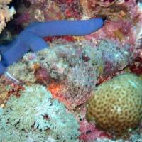 Blauer Seestern, Oktober 2003