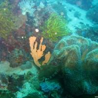 Korallen und Haarsterne, März 2007