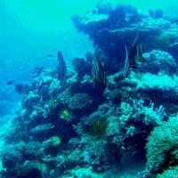 dive-hub-antulang_008