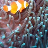 philippinen2004_0181