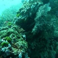 buntes Treiben am Riff, März 2010