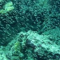 Glasfisch, März 2010