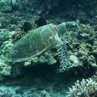 Schildkröte, März 2010